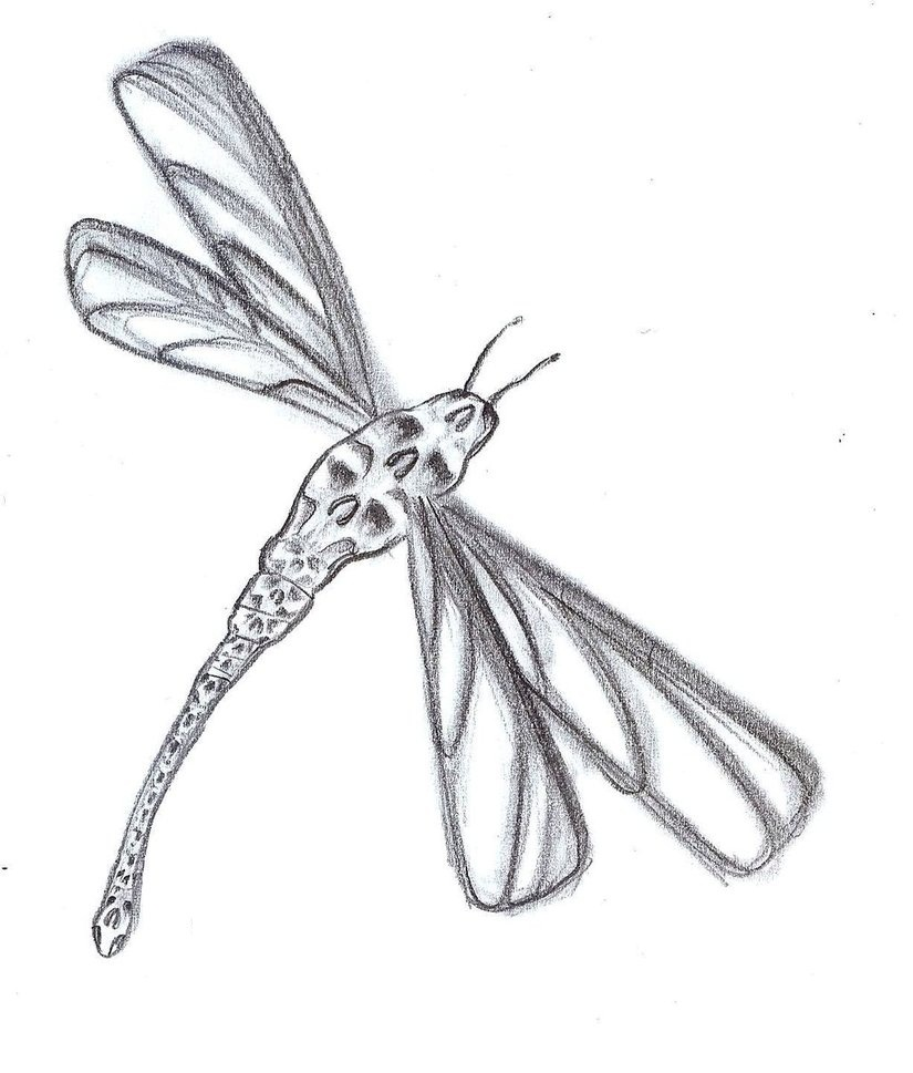 Celtic Dragonfly Drawings Dragonflies Tattoos