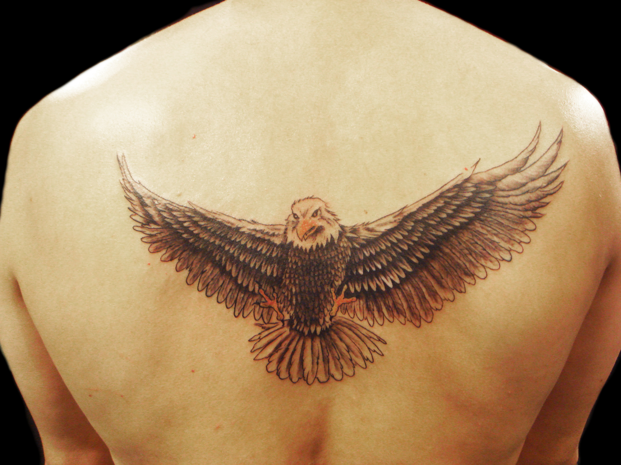 Eagle Tattoos Designs, Ideas And Meaning
