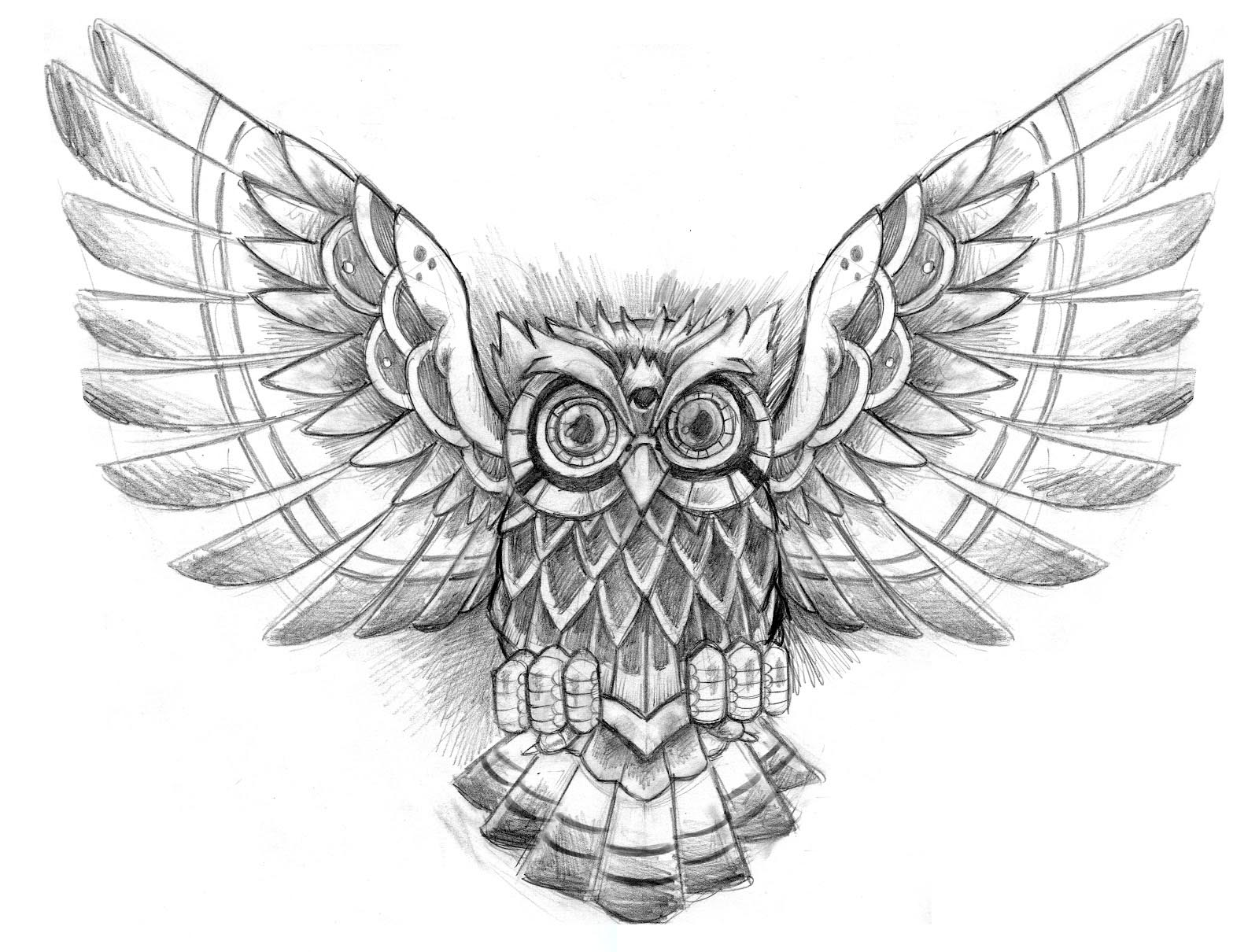 Flying owl pencil drawings - photo#26