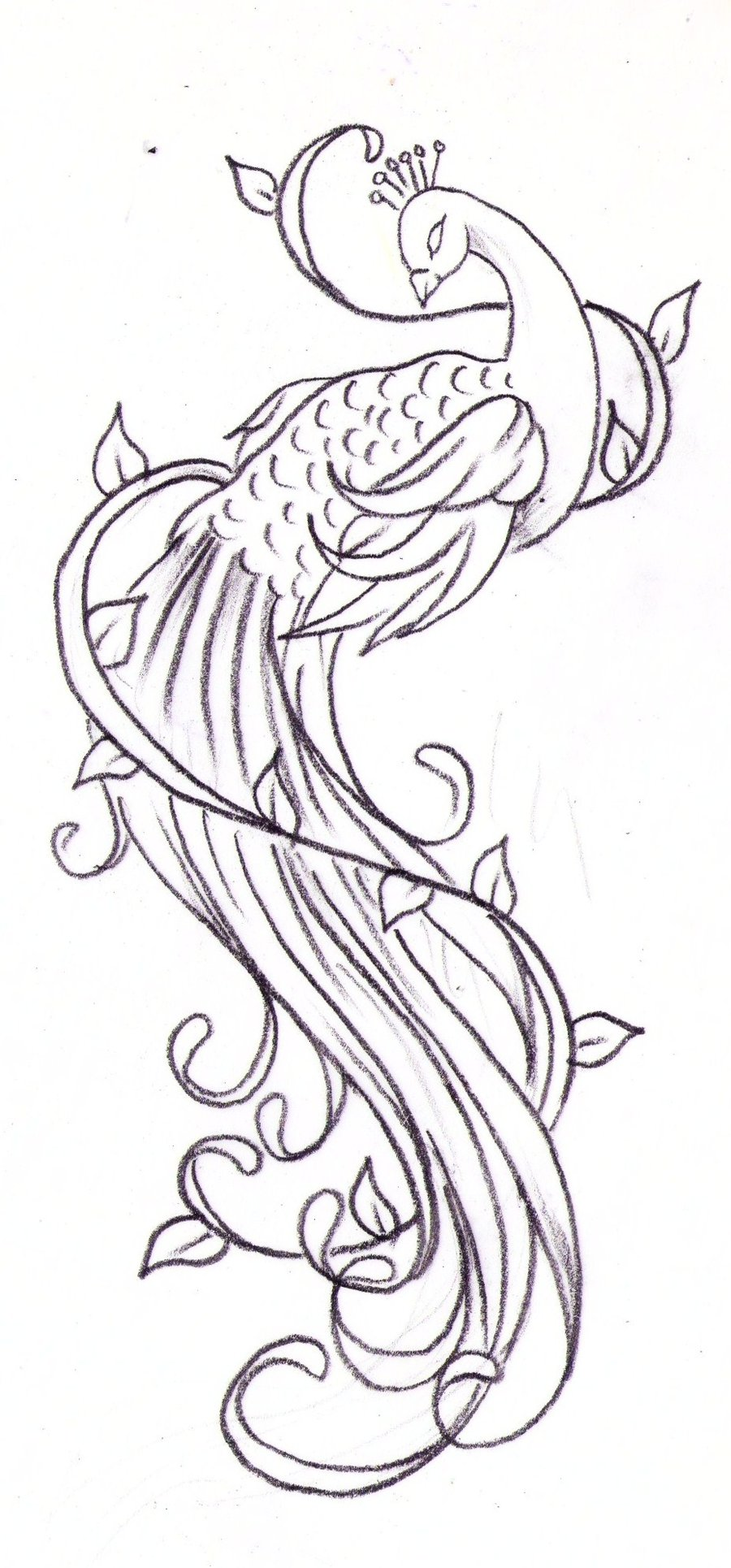 peacock tattoos designs  ideas and meaning