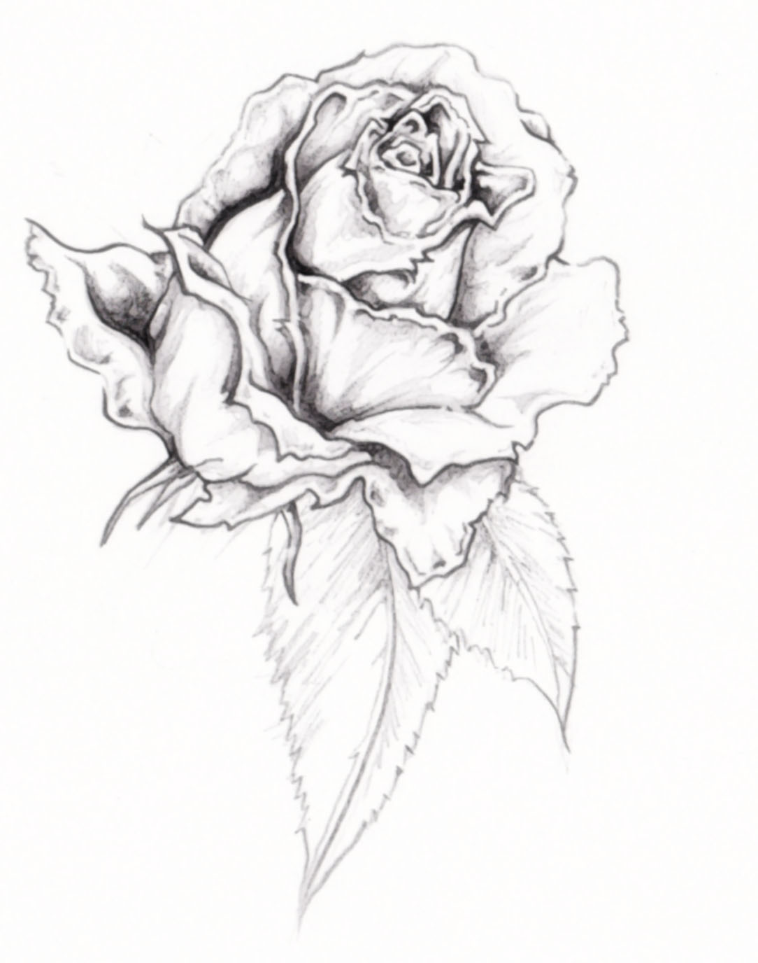 Gallery For gt Tattoos Designs Roses