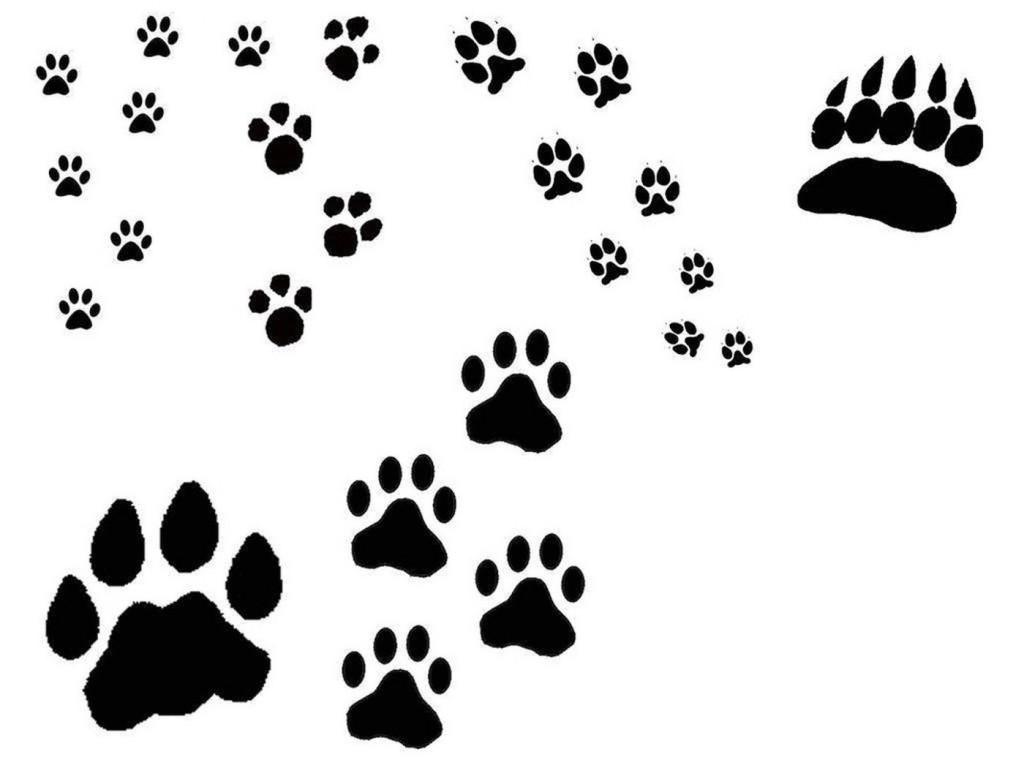 Pin free cat paw tattoo july print tattoos bear on pinterest