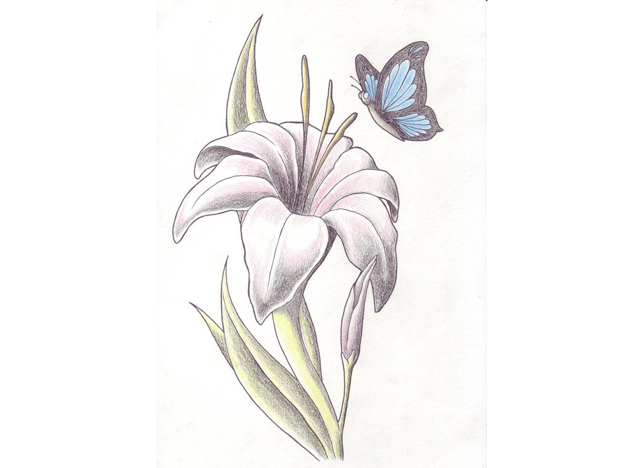 Lily Tattoos Designs Ideas and Meaning
