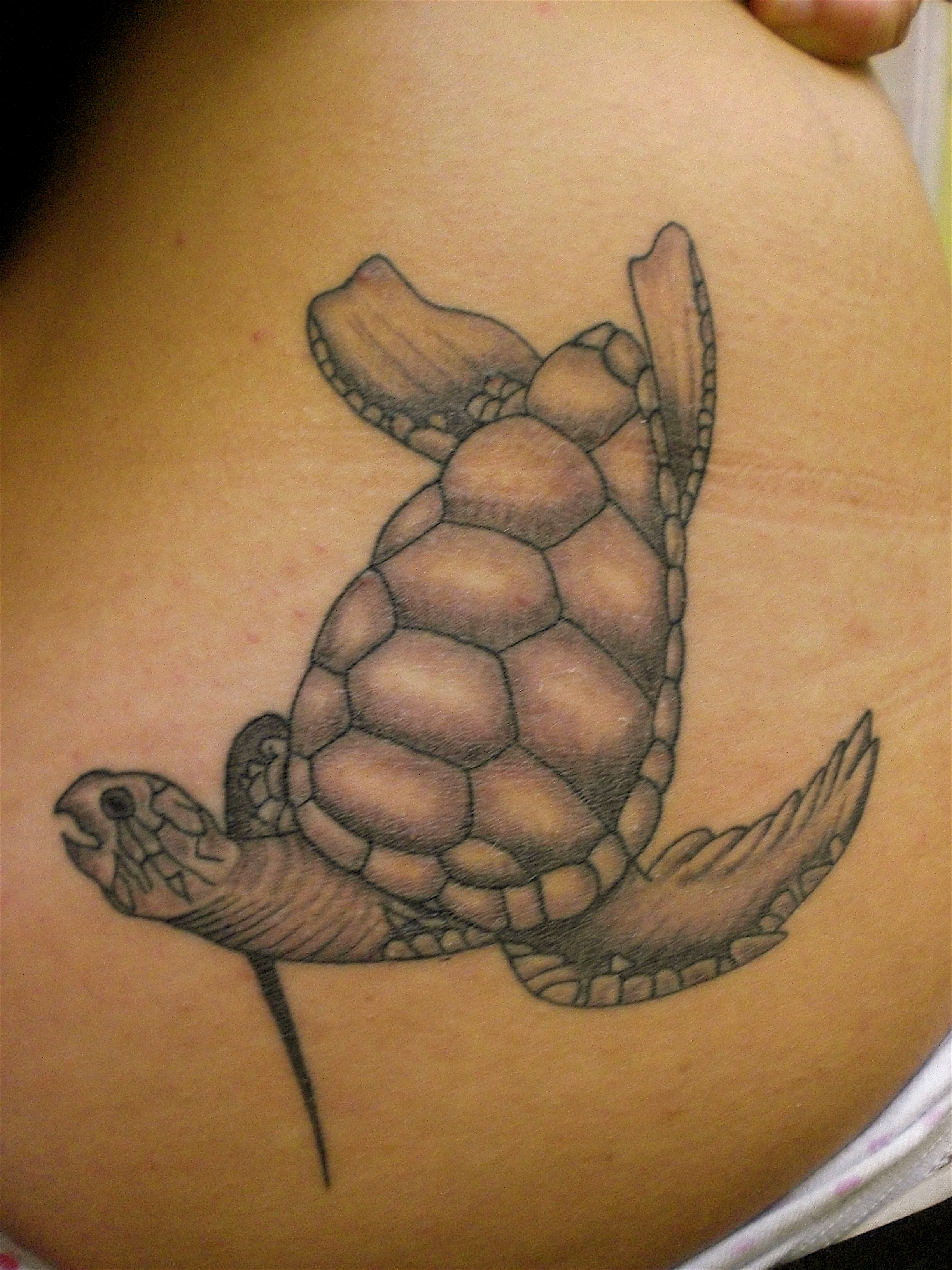 turtle tattoos designs ideas and meaning tattoos for you. Black Bedroom Furniture Sets. Home Design Ideas
