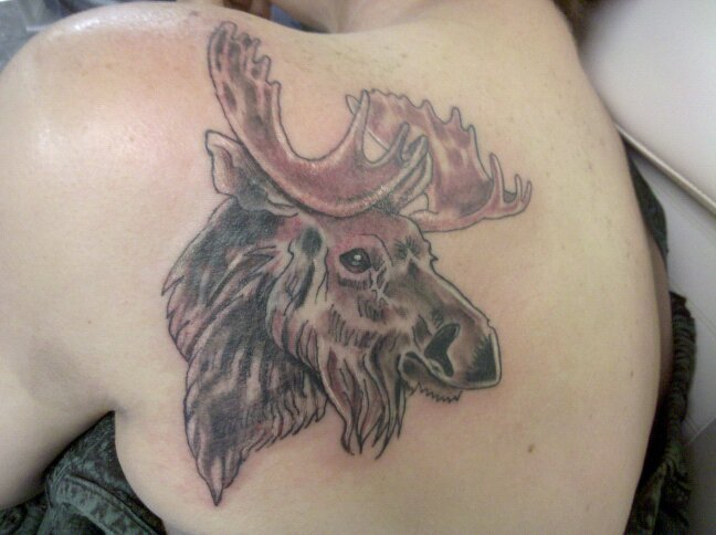 Moose Tattoos Designs, Ideas and Meaning | Tattoos For You