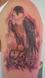 Golden Hawk Tattoo