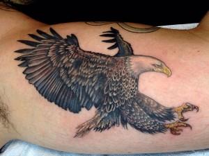Hawks Tattoo