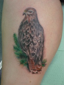 Red Tail Hawk Tattoo
