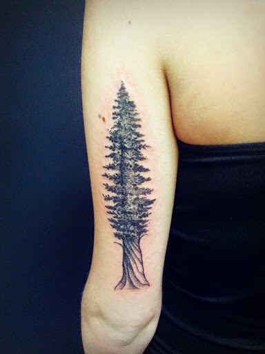 Pine tree tattoos designs ideas and meaning tattoos for you for Tree tattoo on forearm