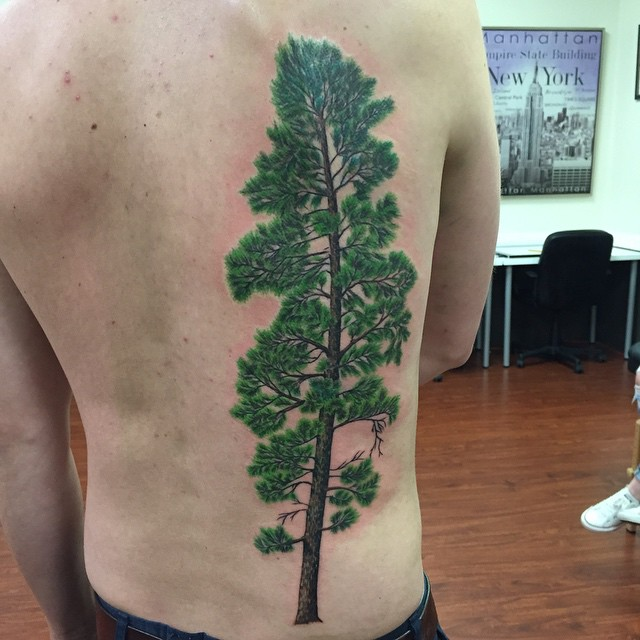 Pine tree tattoos designs ideas and meaning tattoos for you for What does a tree tattoo mean