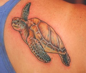 Sea Turtle Tattoos Shoulder