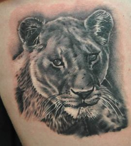 Lioness Tattoo Designs, Ideas and Meaning | Tattoos For You Lioness And Lion